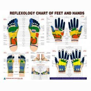 Reflexology new chart study academics teaching educational-engligh language