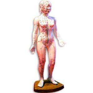 Acupuncture model-female full body