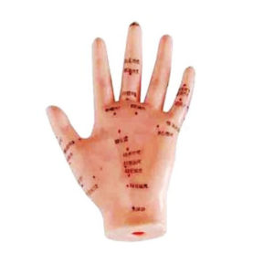 Human hand acupuncture model sculpture professional medical teaching