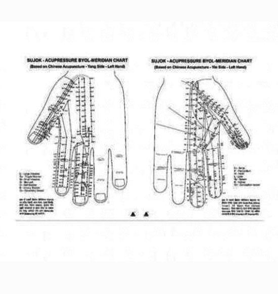Byol meridian chart acupressure su - jok quick academics